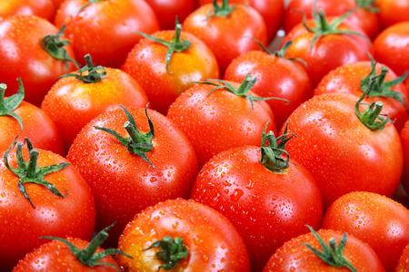 Foto de Fresh tomatoes in drops of dew as a background. - Imagen libre de derechos