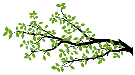 Ilustración de Tree branch with green leaves over white background. Vector graphics. Artwork design element. - Imagen libre de derechos
