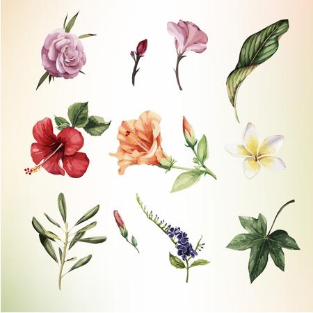 Ilustración de Tropical flowers, watercolor. Vector illustration - Imagen libre de derechos