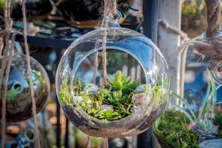 Foto de Cactus terrarium in the market - Imagen libre de derechos