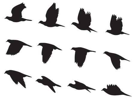 Illustration pour Silhouette Pigeons bird flying motion - image libre de droit