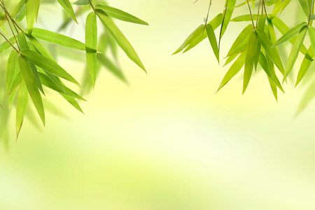 Photo for Bamboo leaf and light soft green background - Royalty Free Image