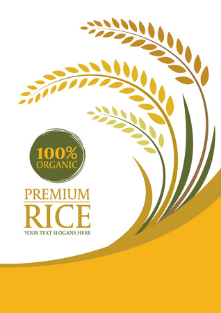 Illustration pour Yellow paddy rice for background - Layout template size A4 design - image libre de droit
