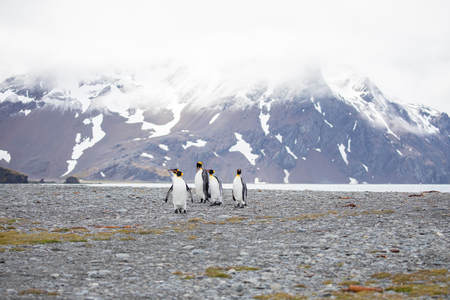 Foto für some penguins in the arctic walking around on the north pole and looking for the young baby's - Lizenzfreies Bild