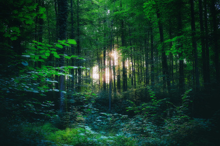 Photo pour Light shining through the trees in the woods - image libre de droit
