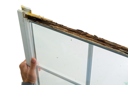 Foto de Man holding a damaged window with wet rot in the top of the wooden frame during replacement in preparation for winter over white - Imagen libre de derechos