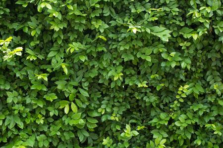 Foto de Green leaves for background - Imagen libre de derechos