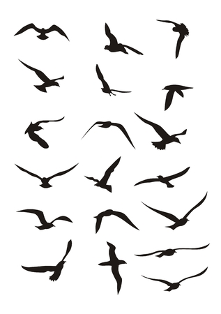 Abstract vector illustration of flying birds