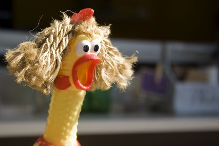 Photo pour A rubber chicken has been given some hair, adding to the expression of surprise/shock on it.  Could be used for unbelievable 'sale' etc. - image libre de droit