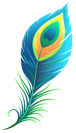 Ilustración de Peacock feather. Isolated illustration format - Imagen libre de derechos