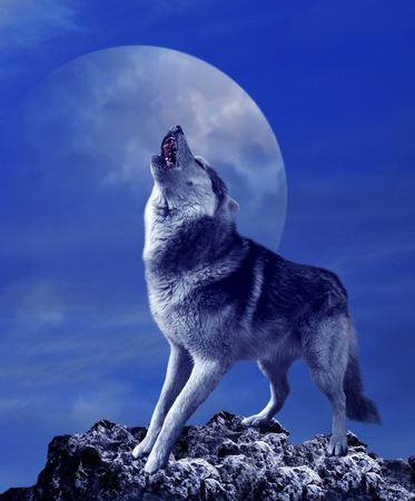 Foto de A howling wolf against the background of the night sky with the moon - Imagen libre de derechos
