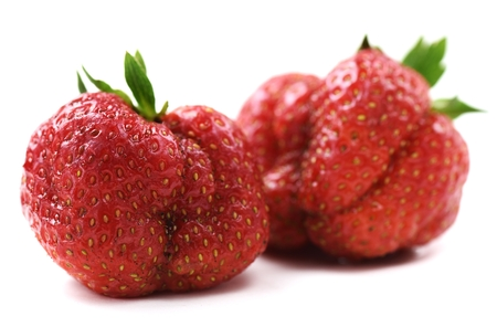 Foto de Ugly organic heirloom home grown strawberries isolated closeup - Imagen libre de derechos