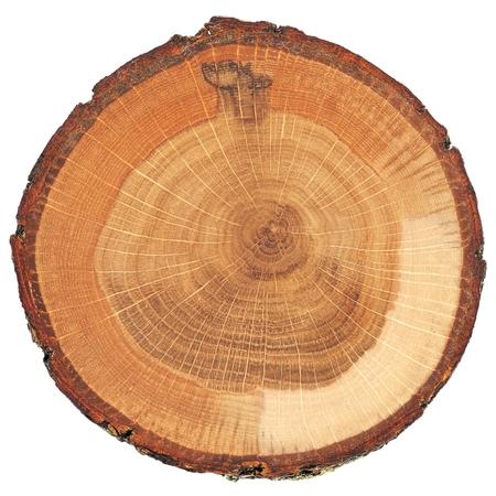 Photo pour Cracked oak split with bark isolated overhead view - image libre de droit