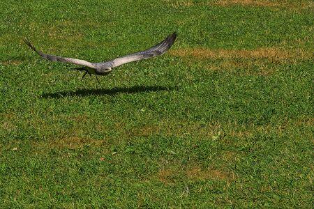 Foto de Falcon - Imagen libre de derechos