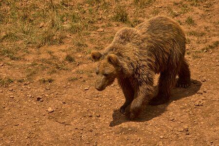 Foto de A little bear - Imagen libre de derechos