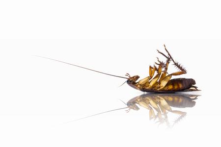 Photo pour Cockroaches die upside down. - image libre de droit
