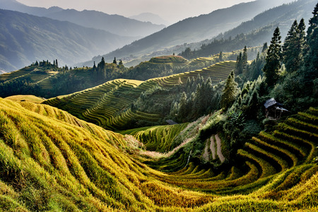 Photo pour rice terraced fields of Wengjia longji Longsheng Hunan China - image libre de droit