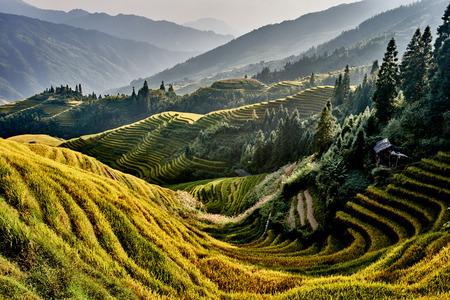 Photo for rice terraced fields of Wengjia longji Longsheng Hunan China - Royalty Free Image