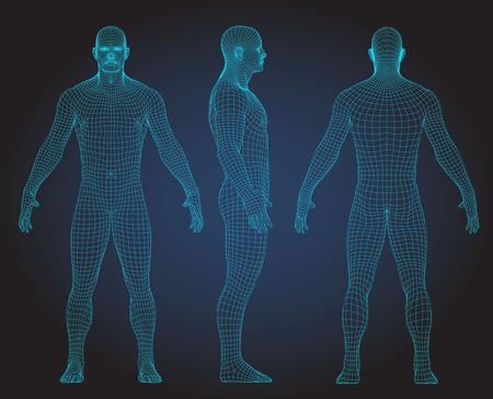 Illustration pour Set of 3D wire frame human body vector illustration. Front, Back, Side view - image libre de droit