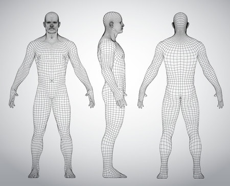 Illustrazione per Set of 3D wire frame human body vector illustration. Front, Back, Side view. Polygonal model - Immagini Royalty Free