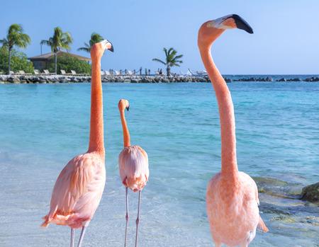 Photo pour Beautiful flamingos on the beach - image libre de droit