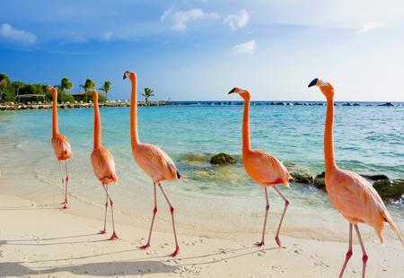 Foto de Amazing flamingo on the beach, Aruba island - Imagen libre de derechos