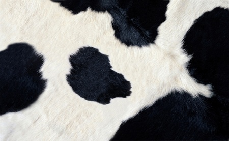 real black and white cow hide