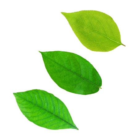 Foto de Green leaf - Imagen libre de derechos
