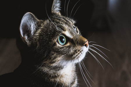 Foto de Cat looking on light - Imagen libre de derechos