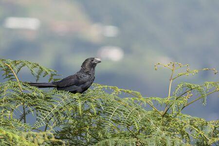 Foto de Birds of colombia - Imagen libre de derechos