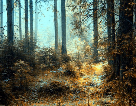 a breathtaking view as the sun shines through the forest on a misty day.