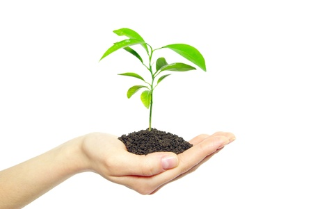 Photo pour plant in female hands isolated on white background - image libre de droit