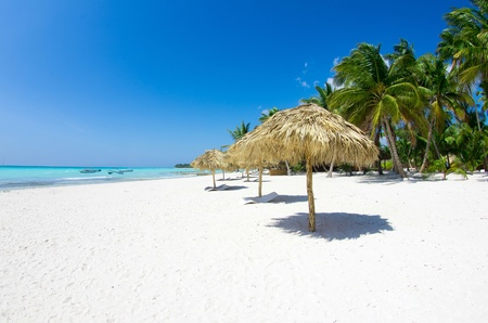 Foto de Beach chairs under a palm tree - Imagen libre de derechos
