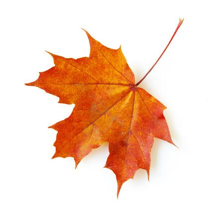Photo pour autumn maple leaf isolated on white background - image libre de droit