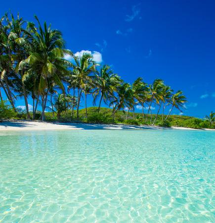 Foto de Palm and tropical beach - Imagen libre de derechos
