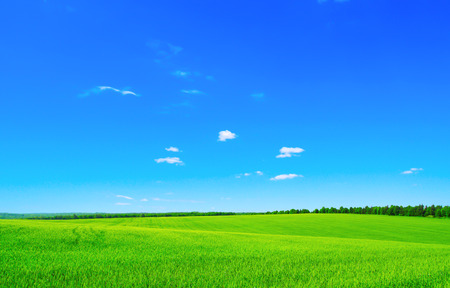 Photo pour green field and blue sky - image libre de droit