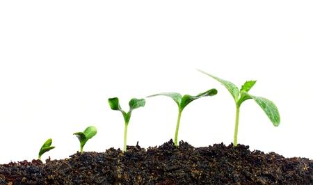 Foto de Growing plants - Imagen libre de derechos