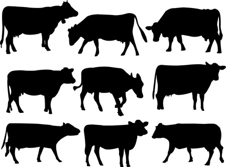 cow silhouette collection