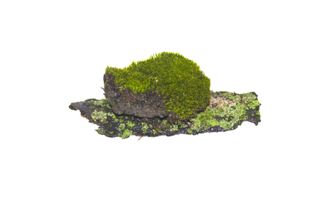 Foto de moss isolated on white background - Imagen libre de derechos