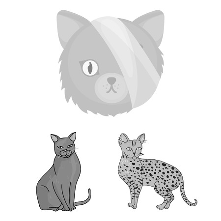Isolated object of pet and sphynx. Collection of pet and fun stock symbol for web.