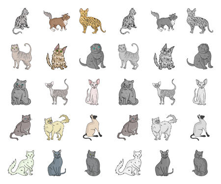 Breeds of cats cartoon,mono icons in set collection for design. Pet cat vector symbol stock  illustration.