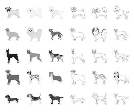 Dog breeds mono,outline icons in set collection for design.Dog pet vector symbol stock web illustration.