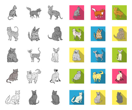 Breeds of cats mono,flat icons in set collection for design. Pet cat vector symbol stock web illustration.