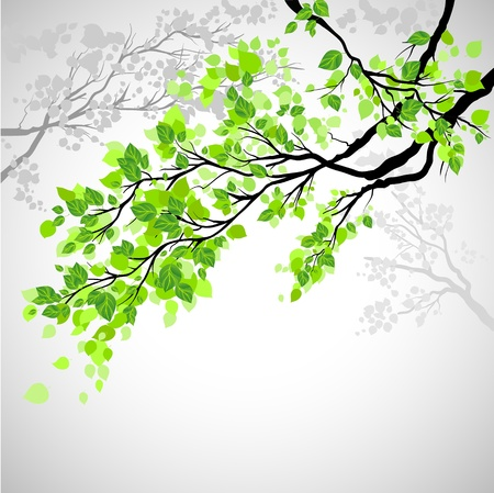 Illustration pour Branch with leaves  - image libre de droit