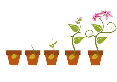 Illustration pour Phases of growth of a flower. - image libre de droit