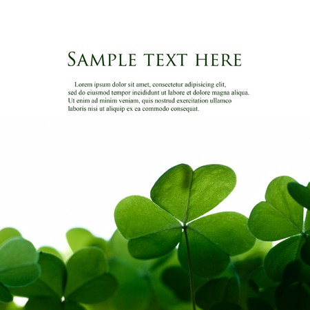 Green clover leafs border with space for text.