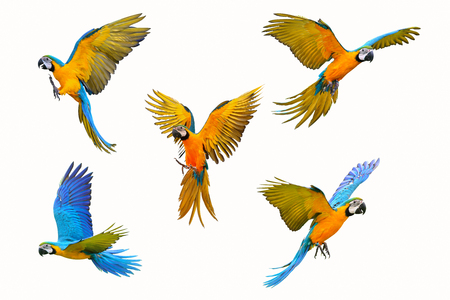 Photo pour Set of macaw parrot isolated on white background - image libre de droit