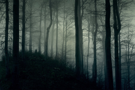Photo for Foggy dark forest with a black slope - Royalty Free Image
