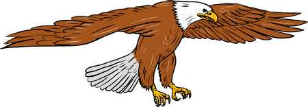 Ilustración de Drawing sketch style illustration of bald eagle swooping wings flapping viewed from the side set on isolated white background. - Imagen libre de derechos