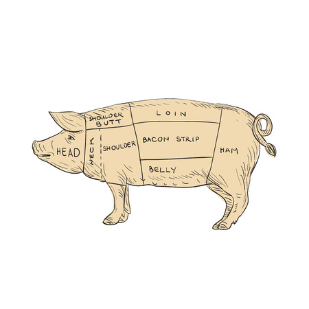 Ilustración de Illustration of a Vintage Pork Meat Cut Map done in hand sketch Drawing style. - Imagen libre de derechos